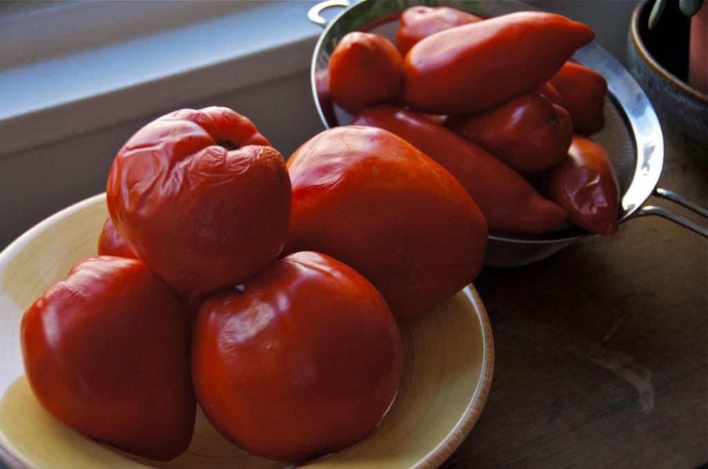 overripe tomatos