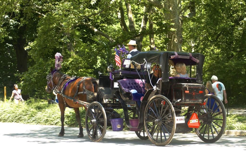 Horse carrage ride